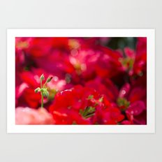 Christmas Poinsettia Buds In Vivid Red Art Print