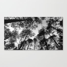 Forest View b/w Canvas Print