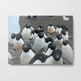 Adelie Penguins 2, Antarctica 2006 Metal Print