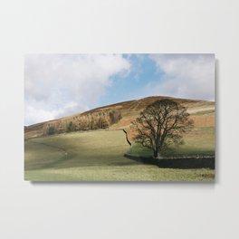 Sunlit tree and hillside. Edale, Derbyshire, UK. Metal Print