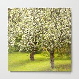 Flowering Apple Trees #decor #society6 #buyart Metal Print