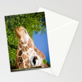 Profilin' Stationery Cards