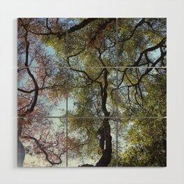 Dos Picos Ramona Oak Tree Wood Wall Art