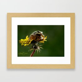 Dandelion King Framed Art Print