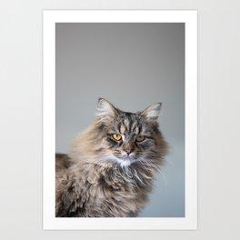 Royal Tom cat : Look into my eyes Art Print