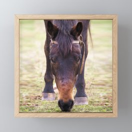 Watercolor Horse 60, Morven Park, Virginia, Such a Long Face Framed Mini Art Print