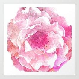 Etching Style Series_Modern Vintage Rose vol.3 Art Print