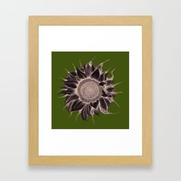 A sunflower for Hedda Framed Art Print