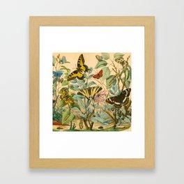 Garden Insects Framed Art Print