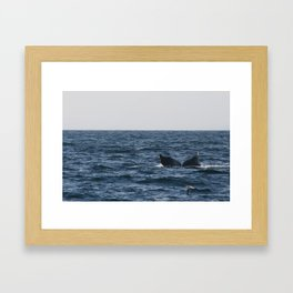 humpback whale tail Framed Art Print