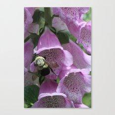 Bumble Bee in Foxglove Canvas Print