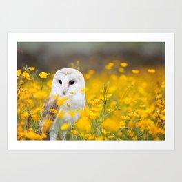 Little Owlet in Flowers (Color) Art Print