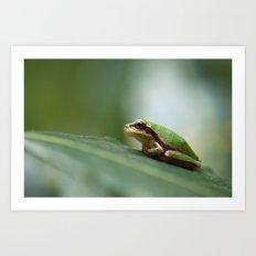 Mediterranean Tree Frog - Hyla meridionalis 8203 Art Print