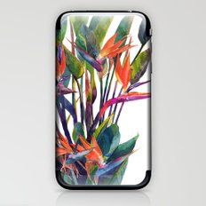 The bird of paradise iPhone & iPod Skin