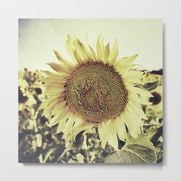 """""""Sunflowers II"""" Vintage dreams Metal Print"""