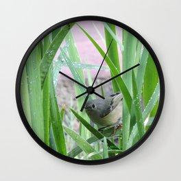 Kinglet Approaching Wall Clock
