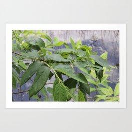 Leaves at Black Bayou, Monroe, Louisiana Art Print