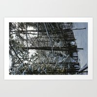 down in the forest Art Print