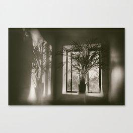 Shadows Dance Upon the Wall Canvas Print