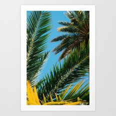 Florida Palm Trees Art Print