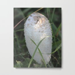 Shaggy Mane Mushroom Metal Print