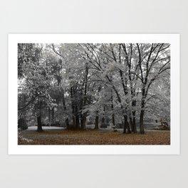 Malmsbury Botanic Gardens No. 3 Art Print