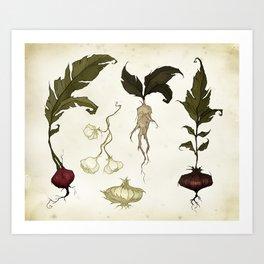 Root Vegetables Art Print