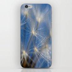 Dandelion Seed Head iPhone & iPod Skin