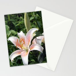 Oriental Hybrid Lily in White, Peach and Pink  Stationery Cards