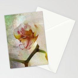 White Phalaenopsis Orchid Stationery Cards
