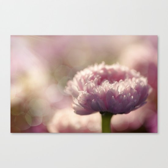Daisy Flower Floral in Love Canvas Print