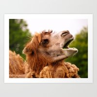 camel Art Prints featuring Camel by GardenGnomePhotography