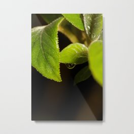 Rain drop leaf Metal Print