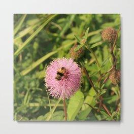 A Bee DPG160412a Metal Print