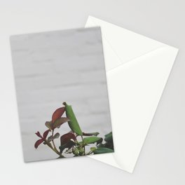 Rose Hips - No. 2 Stationery Cards