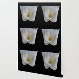 Square Shaped Calla Lily Wallpaper