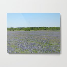 Bluebonnet Field Metal Print