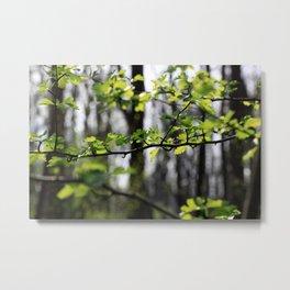 Waldlichter Metal Print