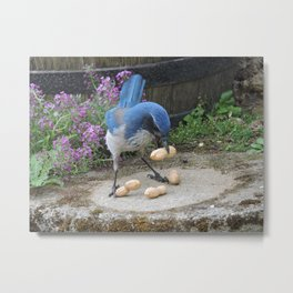 Jay Weighs the Options Metal Print
