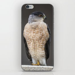 Red eyed Coopers Hawk iPhone Skin