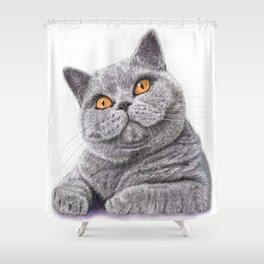 British shorthair Shower Curtain
