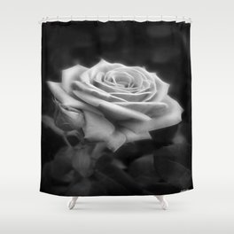 Pink Roses in Anzures 3 B&W Shower Curtain