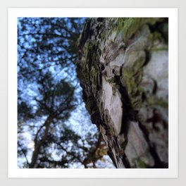 Up To The Tree Tops Art Print