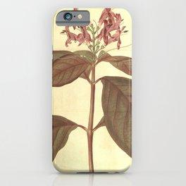 Flower 1870 justicia picta lurido sanguinea Bloody veined justicia10 iPhone Case