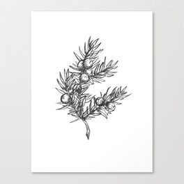 Juniper Canvas Print