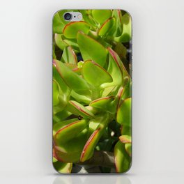 Jade Plant iPhone Skin