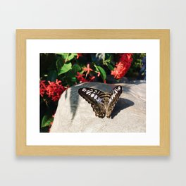 Striking Butterfly Framed Art Print