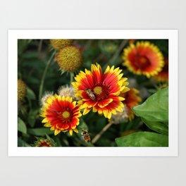 Bees on Blanket Flowers Art Print