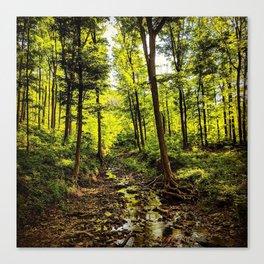 Sunlit Brook Flowing Through Illuminated Forest Canvas Print