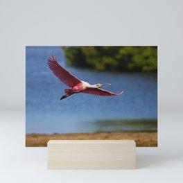 The Spoonbill in Flight at Ding Mini Art Print